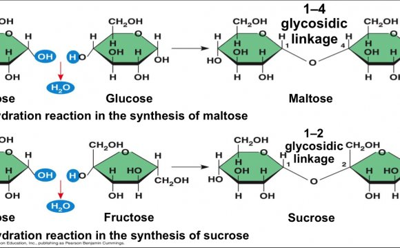 Glycosidic Linkages alpha beta