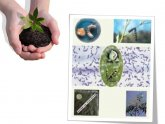 Biofertilizers and Biopesticides