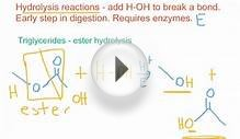 Hydrolysis Reactions for Esters, Amides, and Glycosidic Bonds
